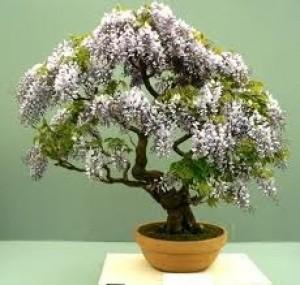 como hacer su propio bonsai, decora tu casa o apartamento